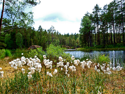 stockholm-green-ekoparken