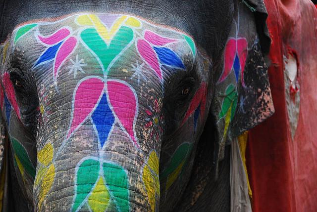 india-jaipur-elephant-festival