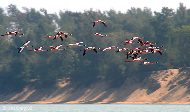 india-orissa-chilika-lake