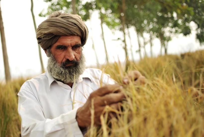 punjab-india-farmers