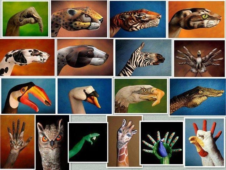 we-are-animals